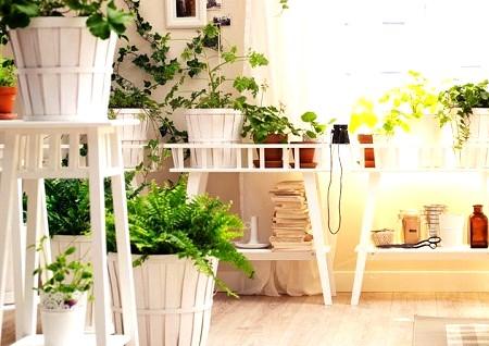 Дизайн комнатные растения