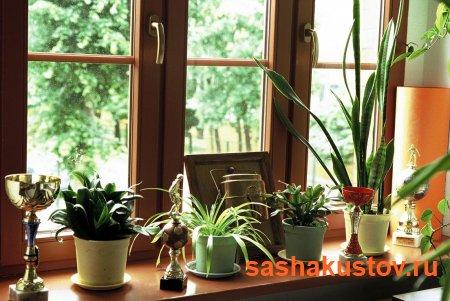 Выбираем деревянные окна: материалы